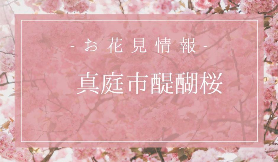 醍醐桜花見