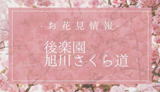 【開催中止】岡山の桜情報!「後楽園・旭川さくら道」の見頃は3月下旬♪桜カーニバル詳細も