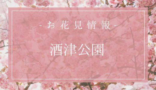 倉敷市の桜の名所と言えば「酒津公園」見頃は3月下旬~。駐車場は300台無料+臨時も!